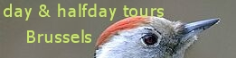 birding in brussels, birdwatching tours in Brussels