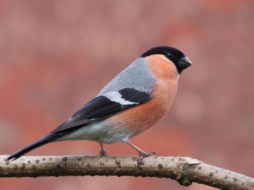 vogels kijken in nederland